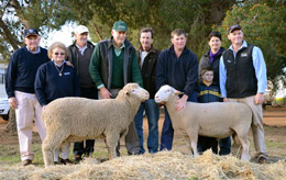 peter, marita, paul, dalles, bond sheep, white suffolk, stud, almondvale, almond, vale